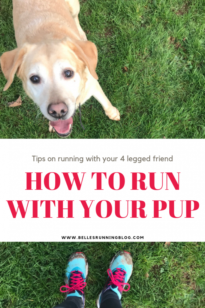Beginners Running | How to run with your dog | Canicross